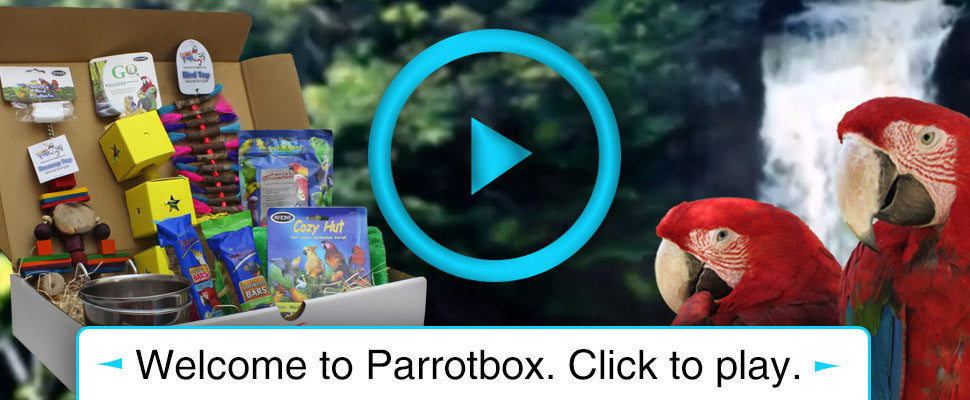 Welcome to Parrotbox. Click to play.