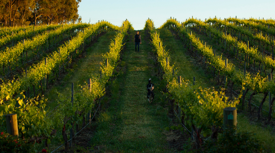 Organic Wines by Whistler, Barossa Valley | Wine Brothers