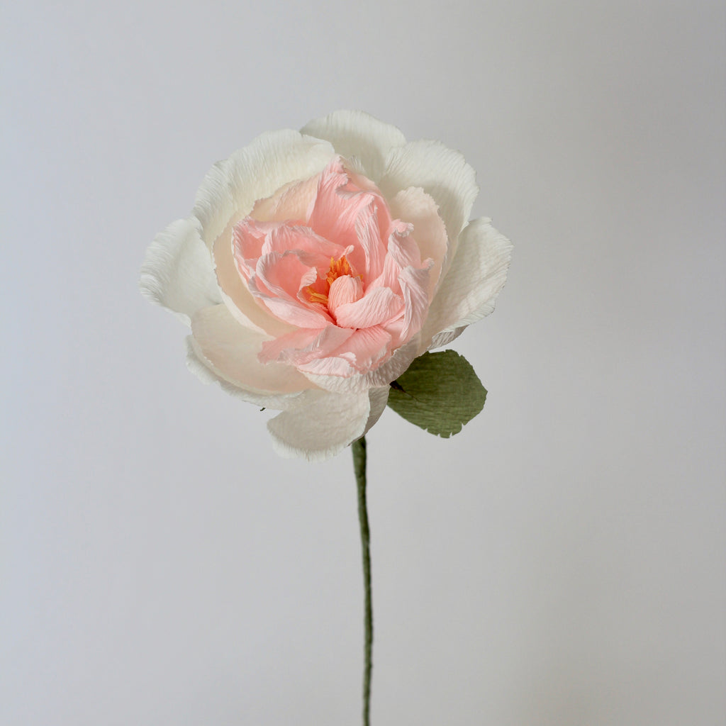 Powder Puff Paper Rose