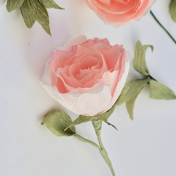 English Shrub Paper Rose
