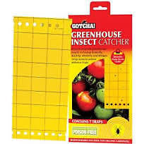INSECT CATCHER GREEN HOUSE HYDROPONICS