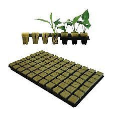 GRODAN 18X 36mm SBS ROCKWOOL PROPAGATION GROW CUBES TRAY OF 77 HYDROPONICS