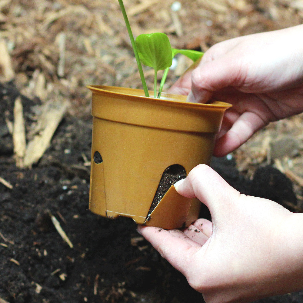 "SelfEco Compostable Seed Starter Pots - 4"" Round - Step 1: Peel Tabs"