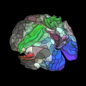 New Brain Map