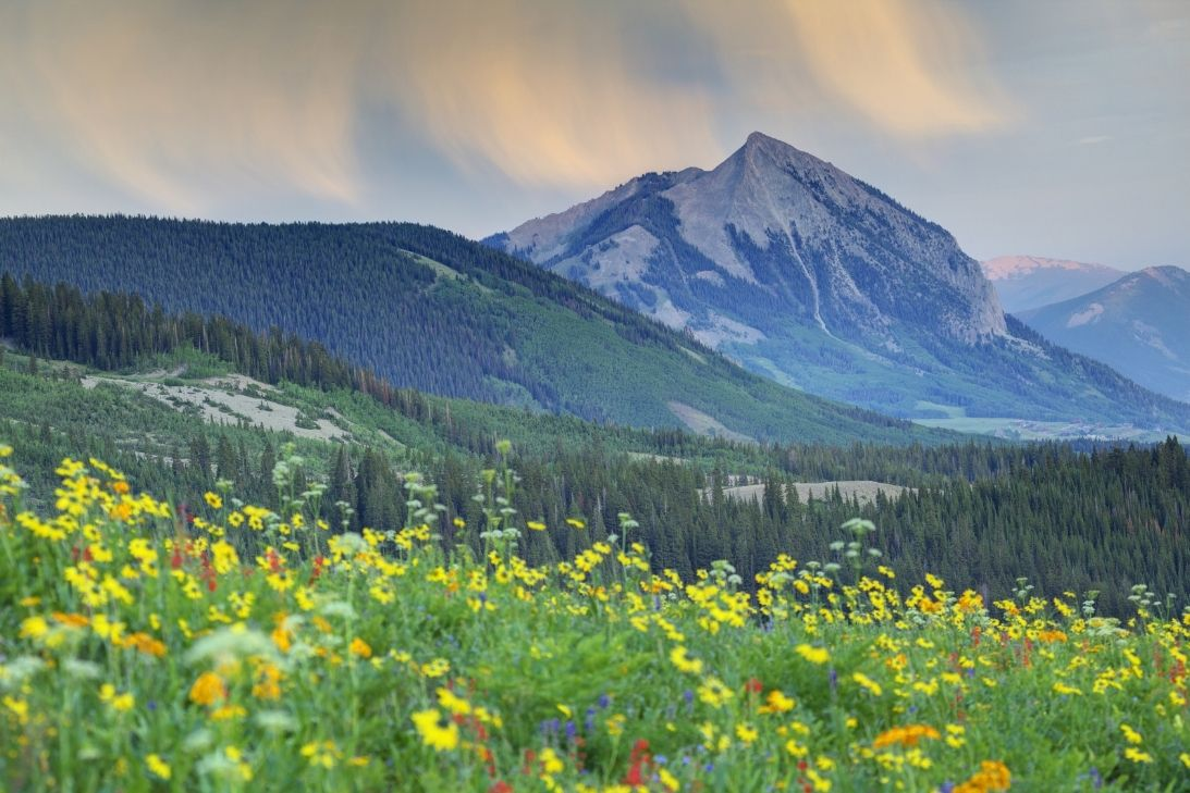 A Colorful Guide to Colorado's Wildflower Season