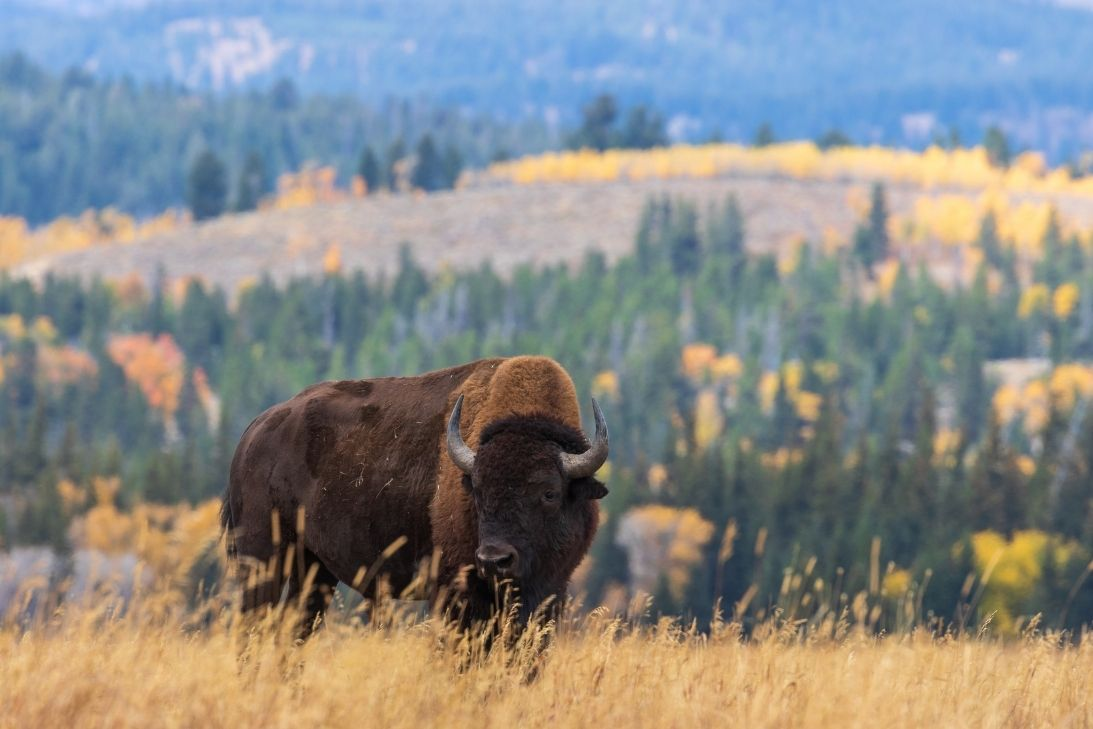 The Most Iconic Animals of Colorado