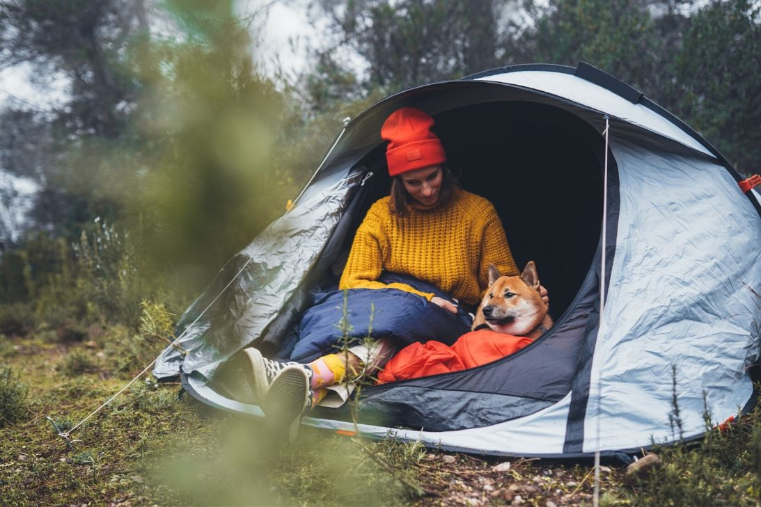 How to Camp with Your Dog in Colorado
