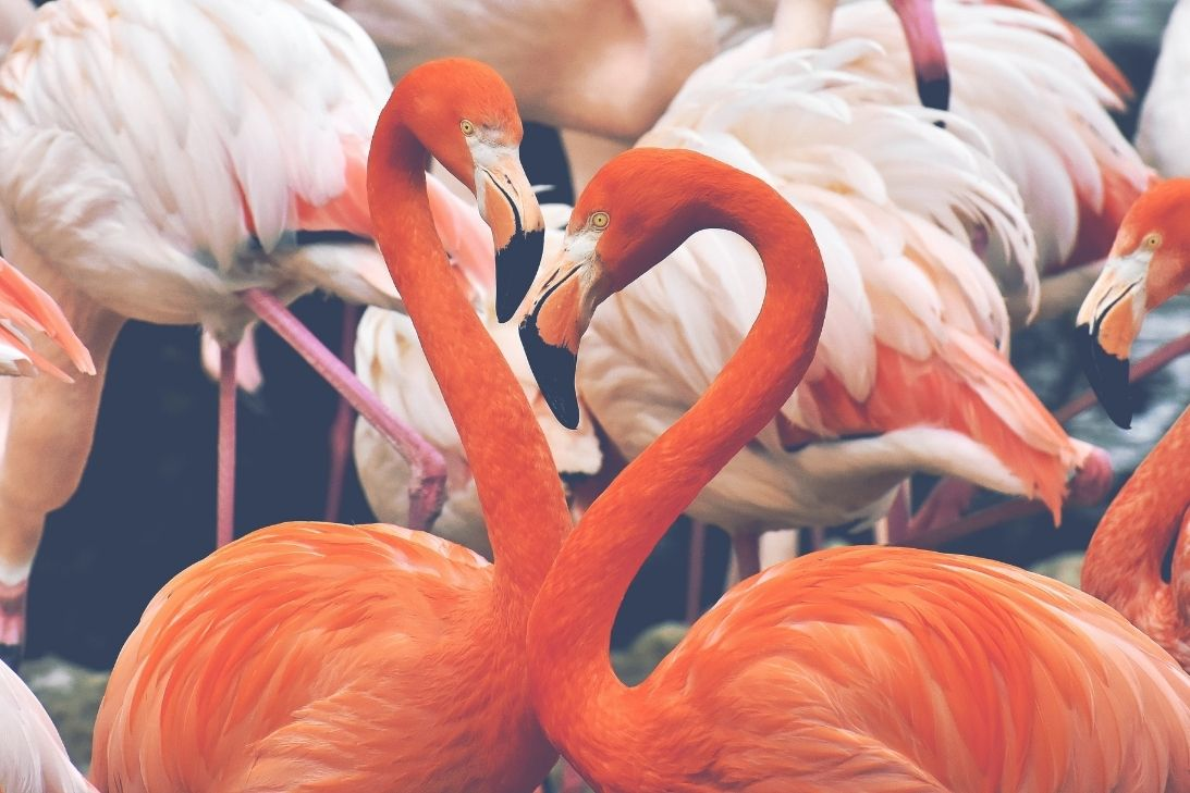 3 Fun Facts About Flamingos You Didn't Know