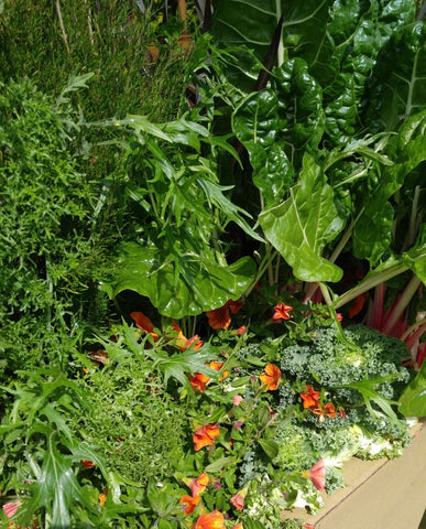 Foodscaping with kale, lettuce, dill, swiss chard and more...