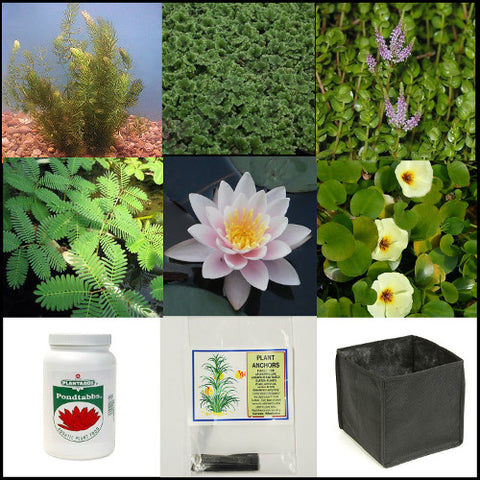 Small Water Garden Complete Collection | 25 - 250 Gallons