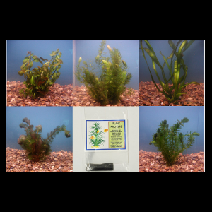 Submerged Pond Plant Collection - Large