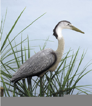 Great Blue Heron Decoy