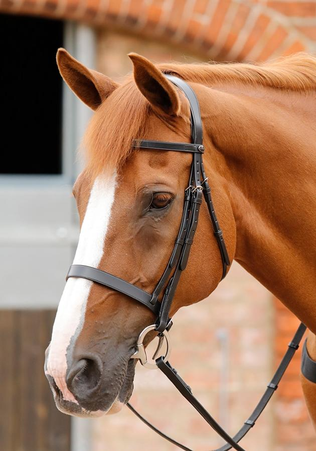 PE Sport Primo Hunter Bridle