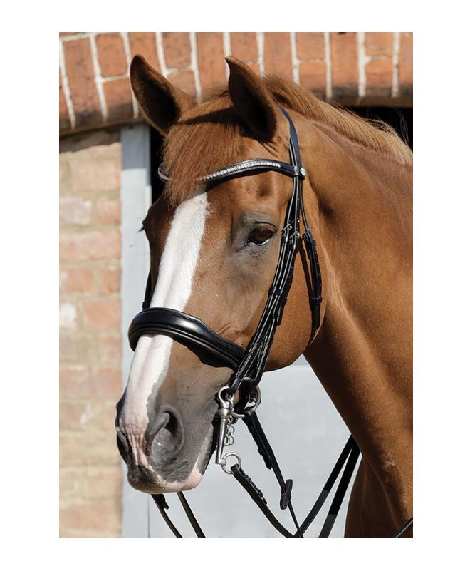 PE Abriano Anatomic Double Bridle