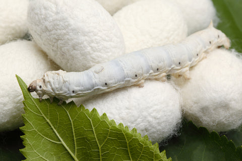 What is Silk? How is it cultivated?