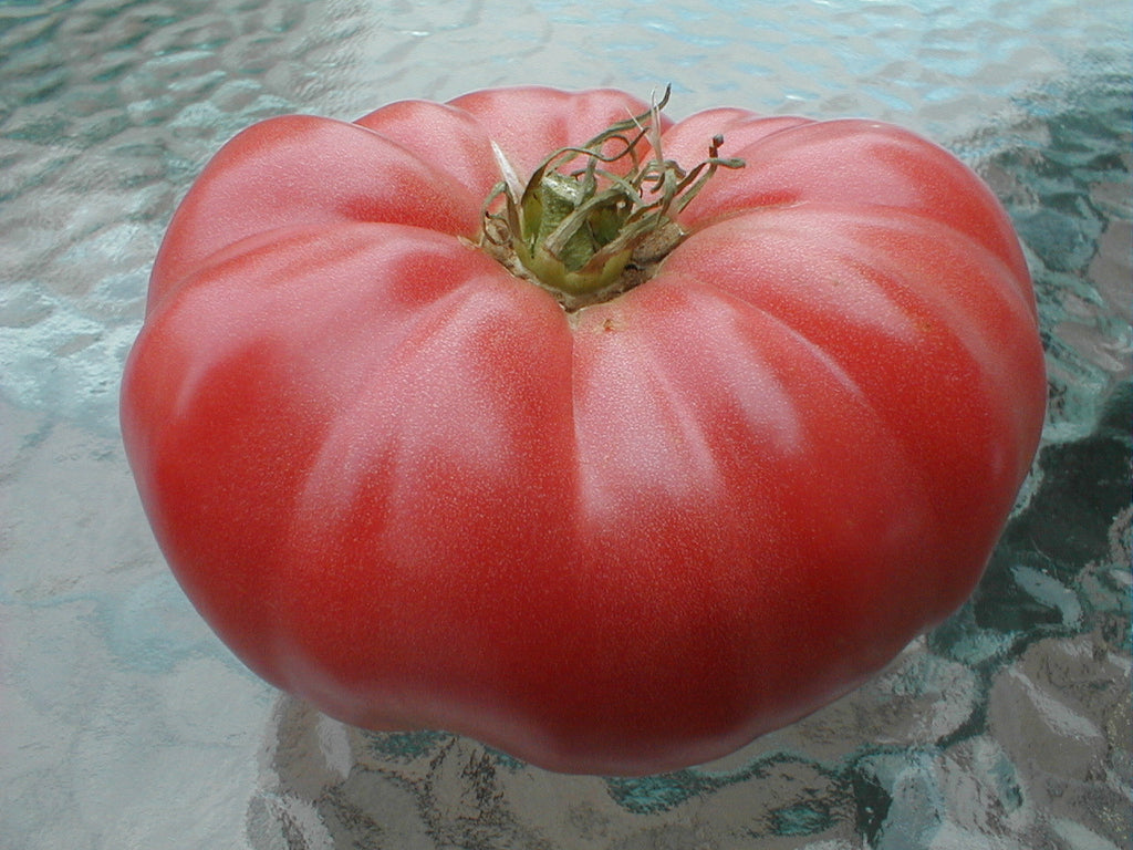 Tomato - Heirloom Brandywine