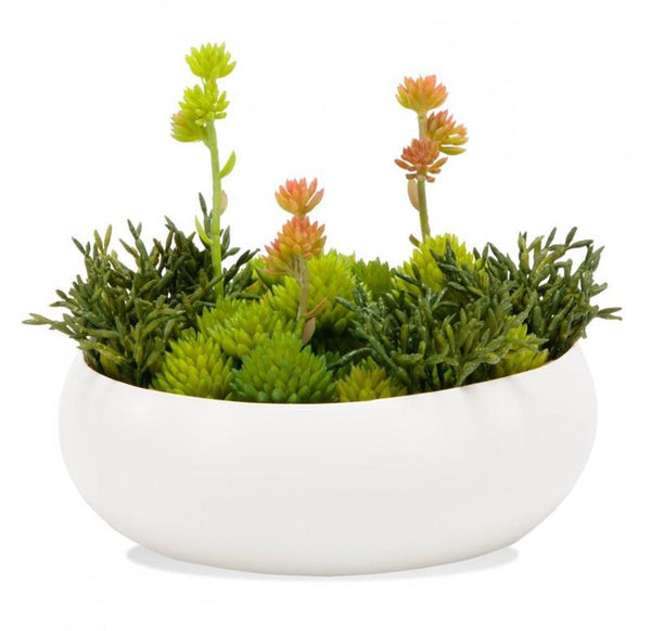 Succulent In The Round