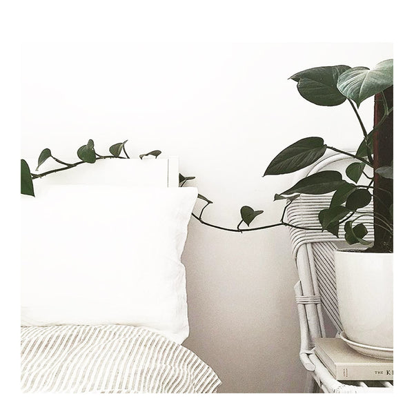 linen pillowslip set white