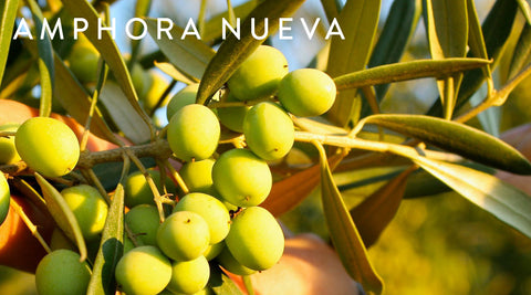 Amphora Nueva Olive Oil and Vinegar | Poet and the Bench