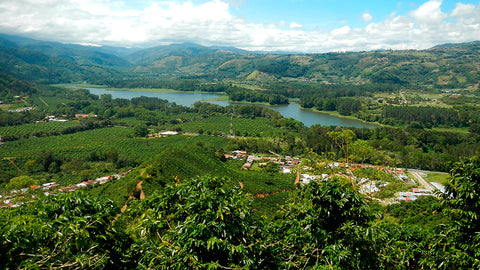 Zalmari Estate Grown Fair Trade Coffee in Costa Rica