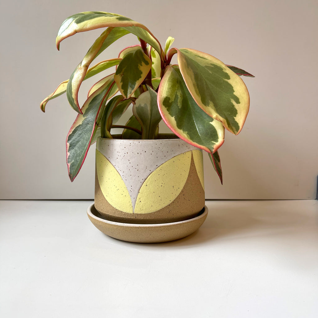 Julems Ceramics planter with yellow leaf design. Shown with plant.