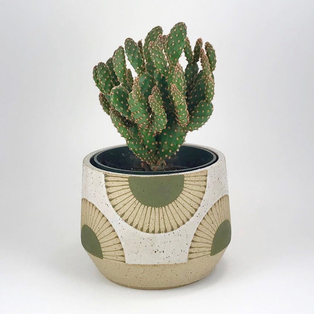 "Judith's wheel thrown 5"" planters create mix and match delight with their geometric designs and fresh style, like this starburst pattern."