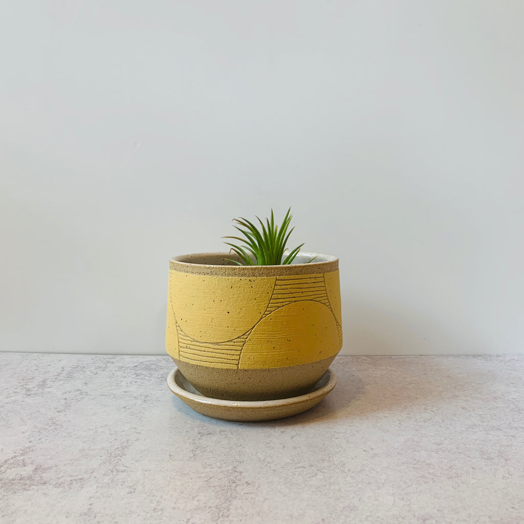 Judith's wheel thrown planters create mix and match delight with their geometric designs and fresh style. Yellow. Dots shown with air plant.
