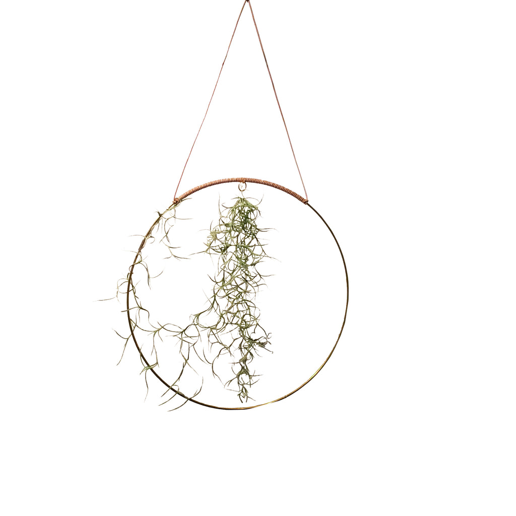 Halo is a beautiful circular mobile made for you to create pretty, earthy radiance. Add a flower cutting from your garden, a sprig of herbs, air plant, a paper flower, or whatever inspires you in the moment. Hang an air plant!