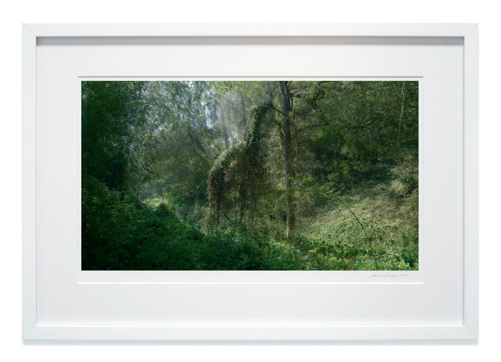 Framed Horse in Forest in high gloss white wood with museum glass