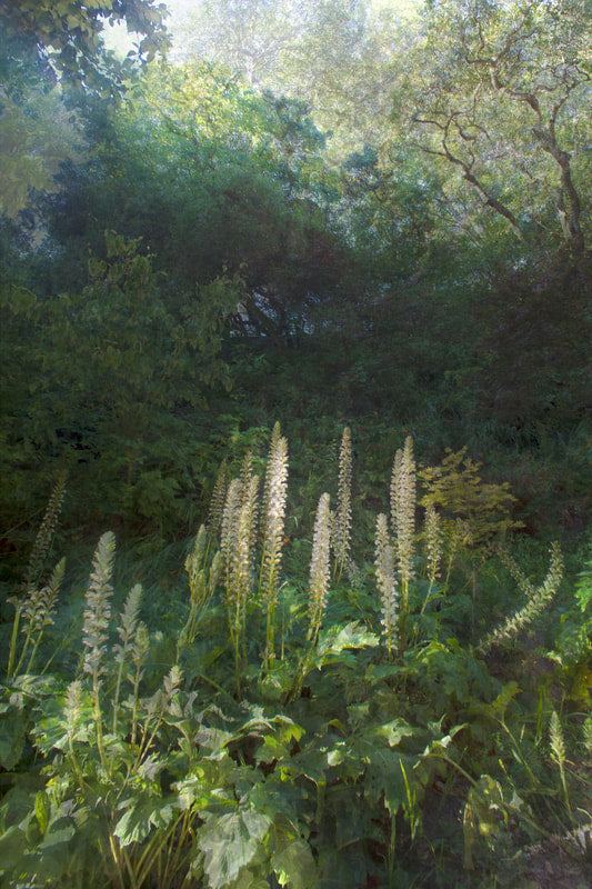 Feather Light photograph of a vista in Golden Gate Park is the result of hours of production work combining multiple exposures and layering as one image–with evocative results by Nico van Dongen