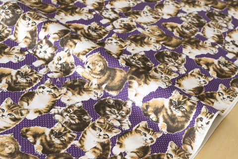 Yuwa Pindot Kittens - purple