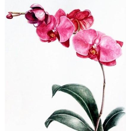 Limited Edition Print - Pink Orchids