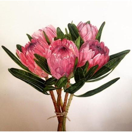 Limited Edition Print - Proteas