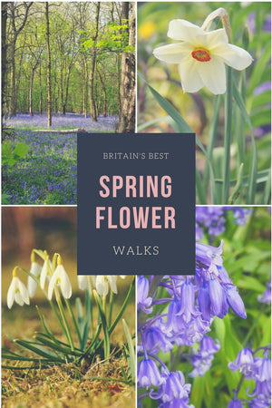 Britain's Best Spring Flower Walks: snowdrops, daffodils & bluebells