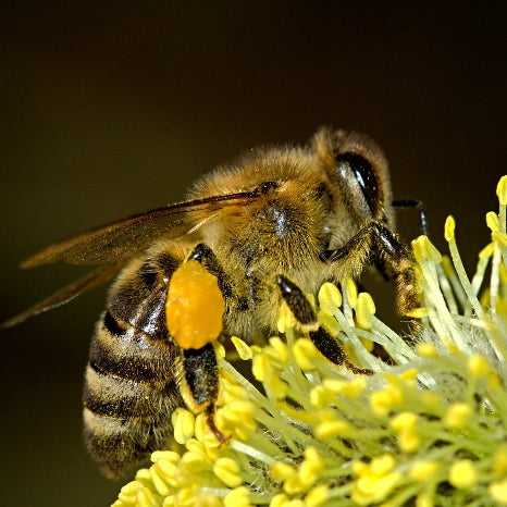 The British Blanket Company supports The Bee Friendly Trust