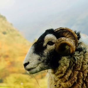 We need to talk about British wool