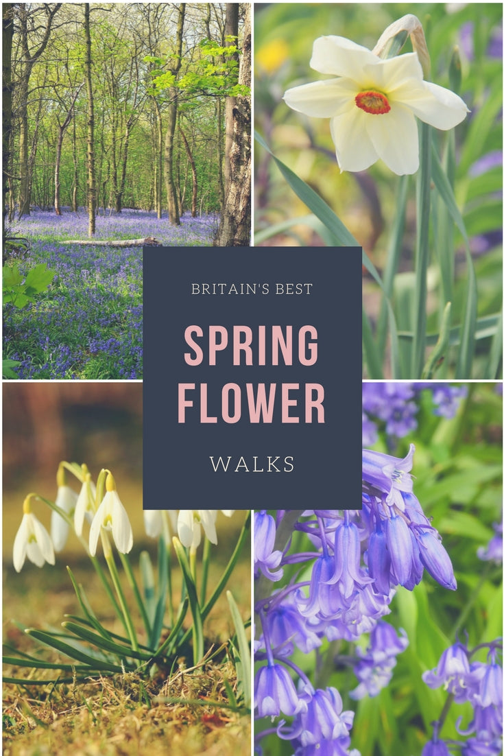 Britains best spring flower walks snowdrop walks daffodil walks bluebell walks
