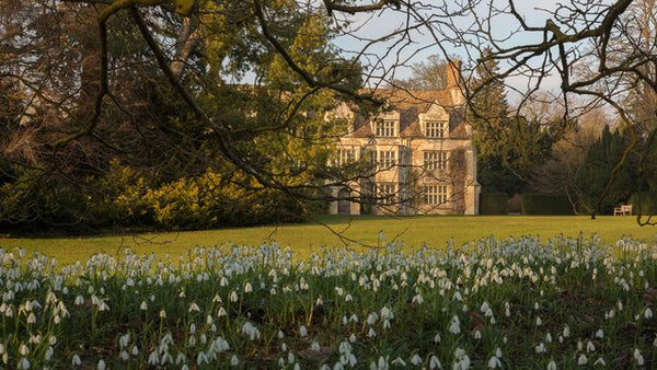Snowdrops at Anglesey Abbey National Trust