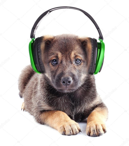 Cute Pup listening to Jason Newland on Soundcloud Podcast