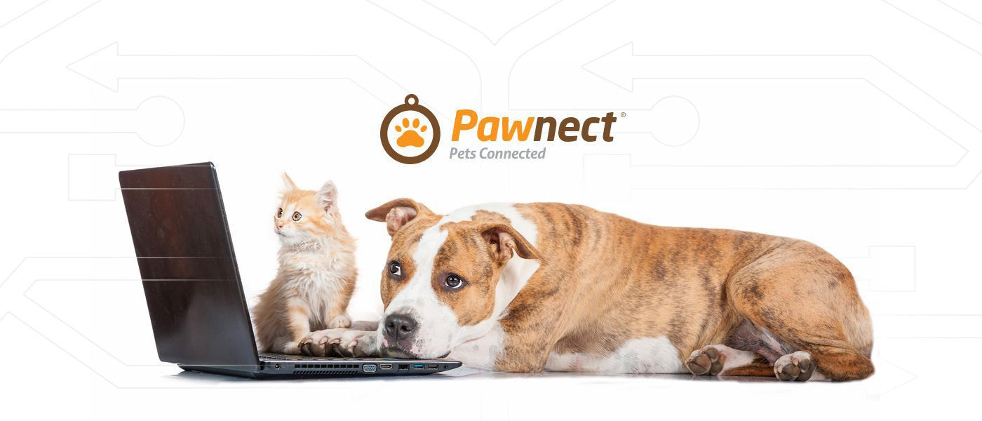 Pawnect tech gear for your pets to keep dogs, and cats connected.