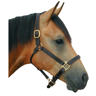 Intrepid Deluxe Leather Halter