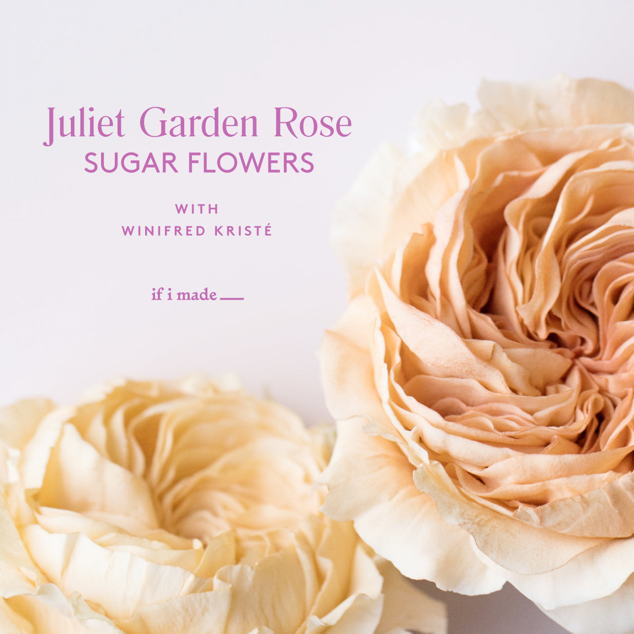 Sale: Juliet Garden Rose with Winifred Kristé Cake