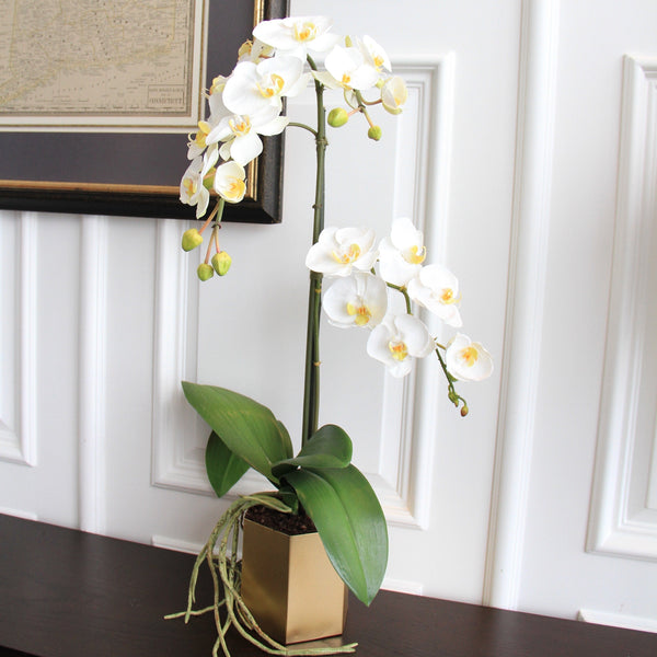 Artificial flowers luxury faux silk white phalaenopsis orchid complete with pot lifelike realistic faux flowers buy online from Amaranthine Blooms UK