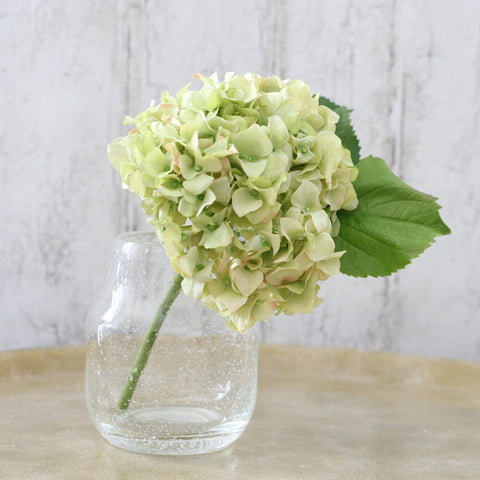 Green hydrangea with vase