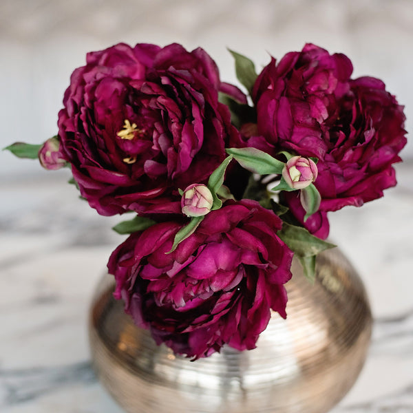 burgundy classic peony - bunch of 6 stems
