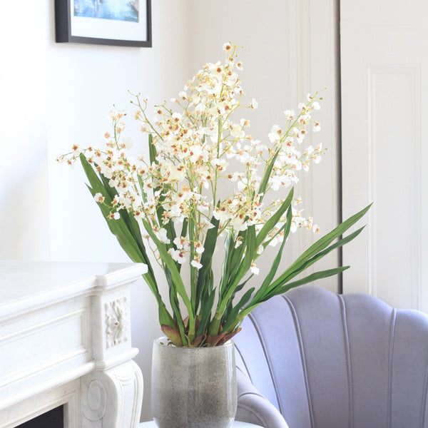 white oncidium orchid plant - 50% OFF