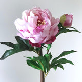 pink large peony - bunch of 6 stems