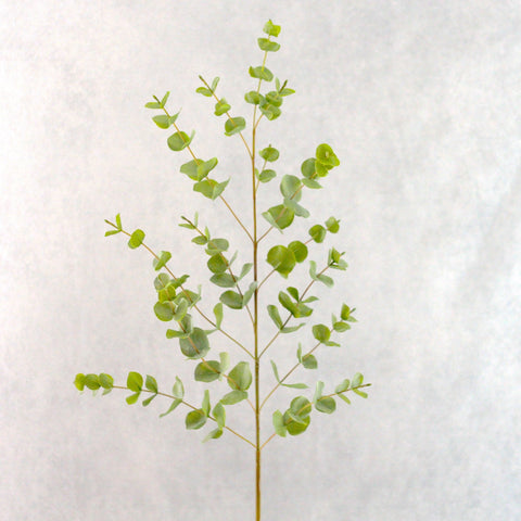 green tall eucalyptus stem - 30% OFF