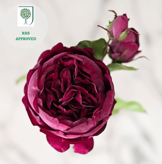luxury artificial fake silk flowers burgundy english rose with buds lifelike realistic faux flowers buy online from Amaranthine Blooms Hong Kong UK