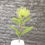 artificial flowers luxury faux silk green pincushion protea lifelike realistic faux flowers buy online from Amaranthine Blooms UK